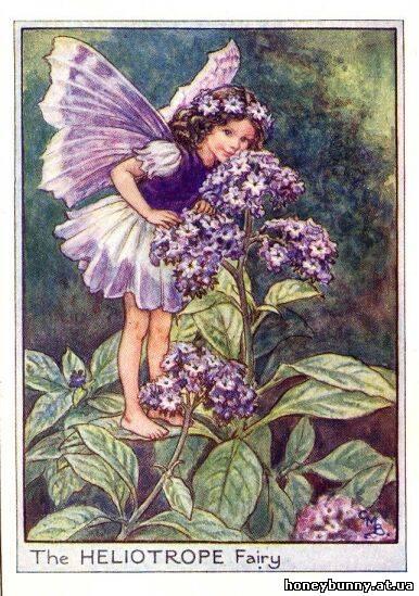 феи цветов лета,
